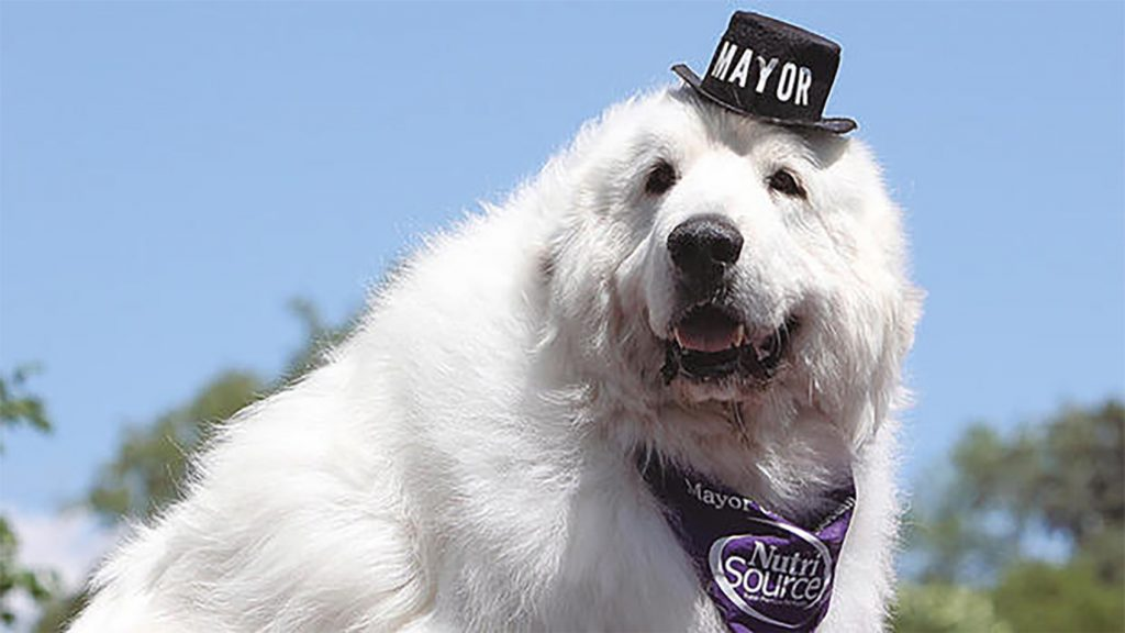 mayor-dog-1024x576