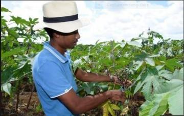 YOUNG FARMER 1
